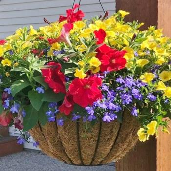Annual container at the end of summer full of blooms