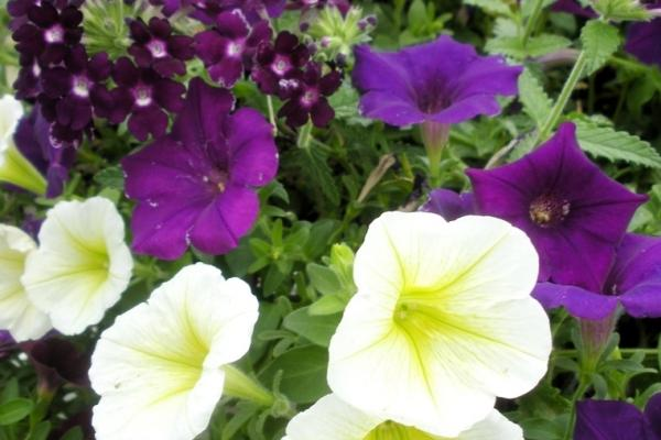 Drummers Garden Center & Floral Spring Planting Party   Greater ...