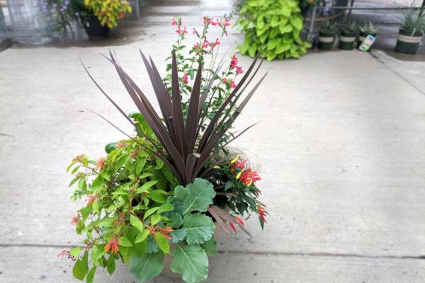 Fall Annual plants in a container for your home or office